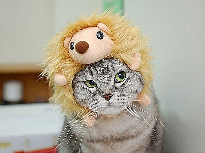 Cute Cat Hats costume Ideas (16)