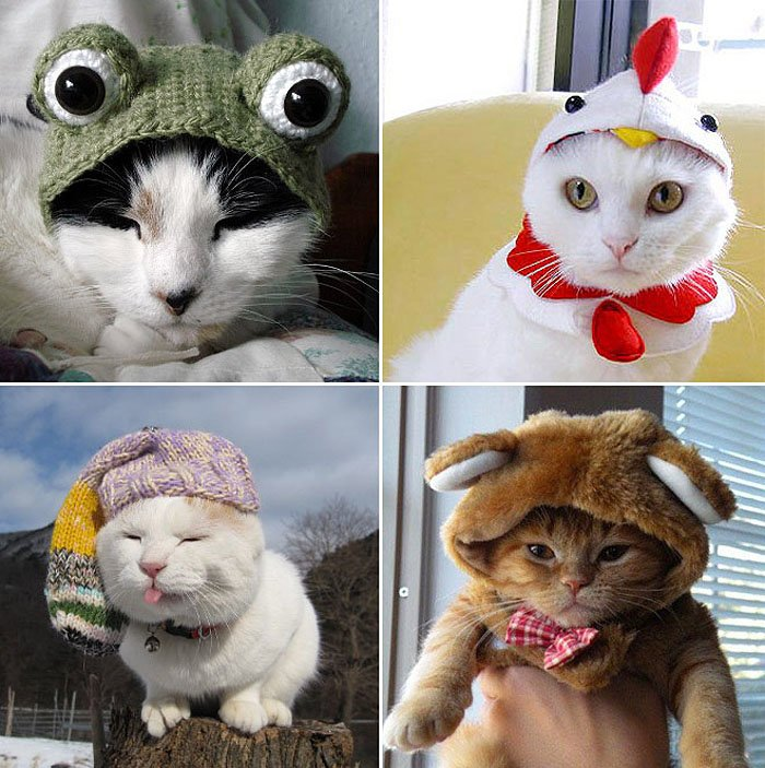 Cute Cat Hats costume Ideas (7)
