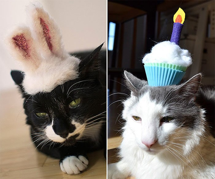 Cute Cat Hats costume Ideas (5)
