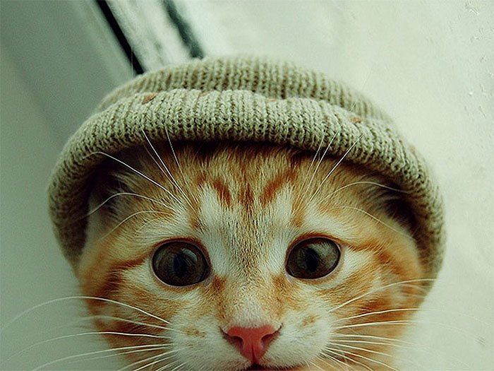 Cute Cat Hats costume Ideas (4)