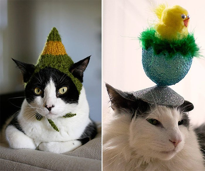 Cute Cat Hats costume Ideas (3)