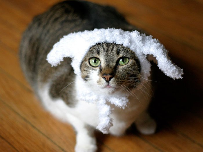 Cute Cat Hats costume Ideas (2)