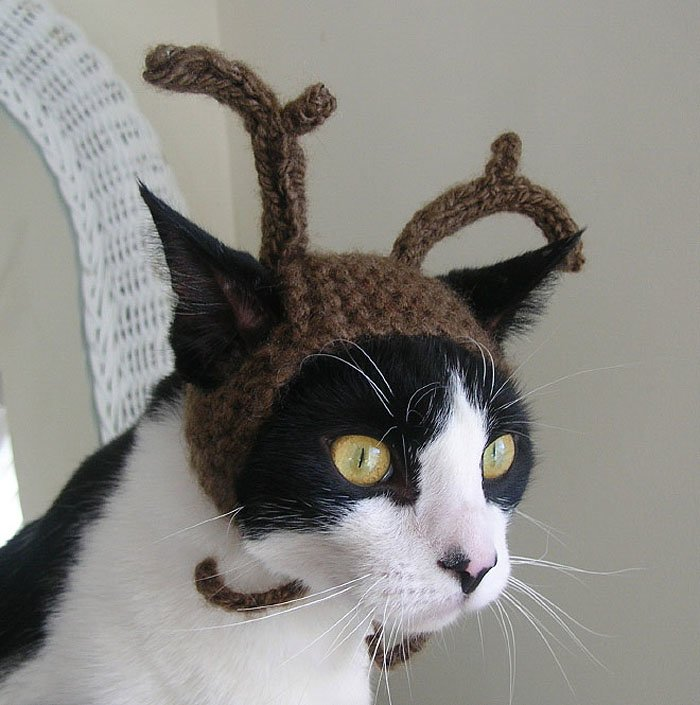 Cute Cat Hats costume Ideas (15)