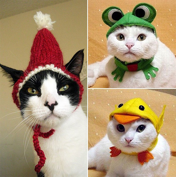 Cute Cat Hats costume Ideas (14)