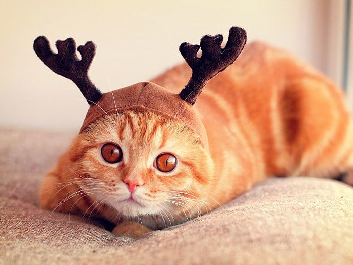 Cute Cat Hats costume Ideas (13)