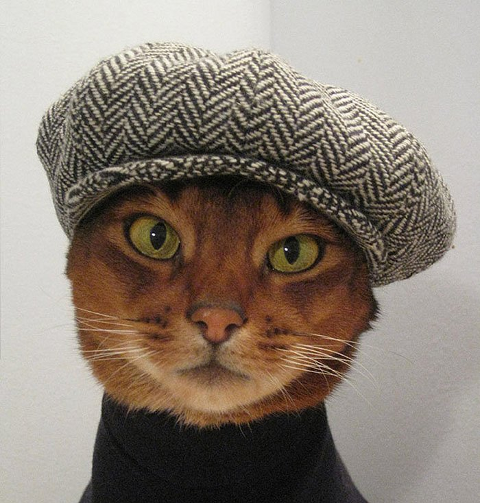 Cute Cat Hats costume Ideas (11)