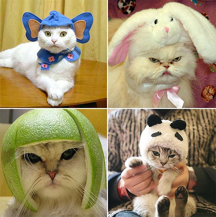 Cute Cat Hats costume Ideas (10)