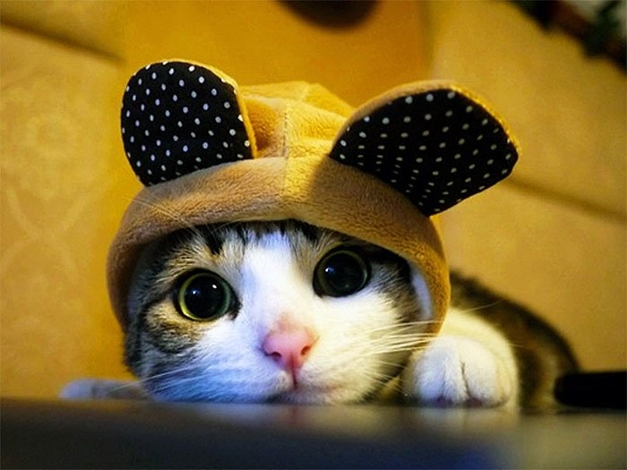 Cute Cat Hats costume Ideas (9)