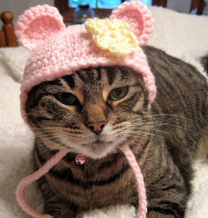 Cute Cat Hats costume Ideas (8)