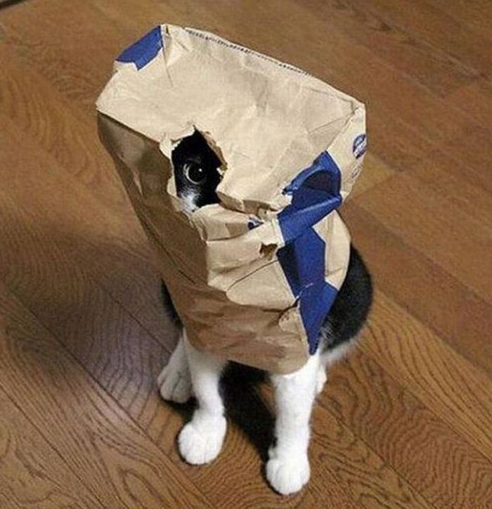 Cats Playing Hide And Seek With You (21)