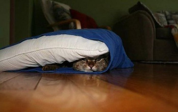 Cats Playing Hide And Seek With You (10)