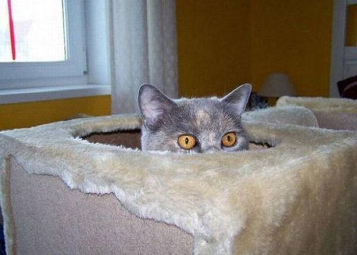 Cats Playing Hide And Seek With You (9)