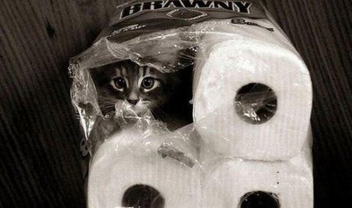 Cats Playing Hide And Seek With You (7)