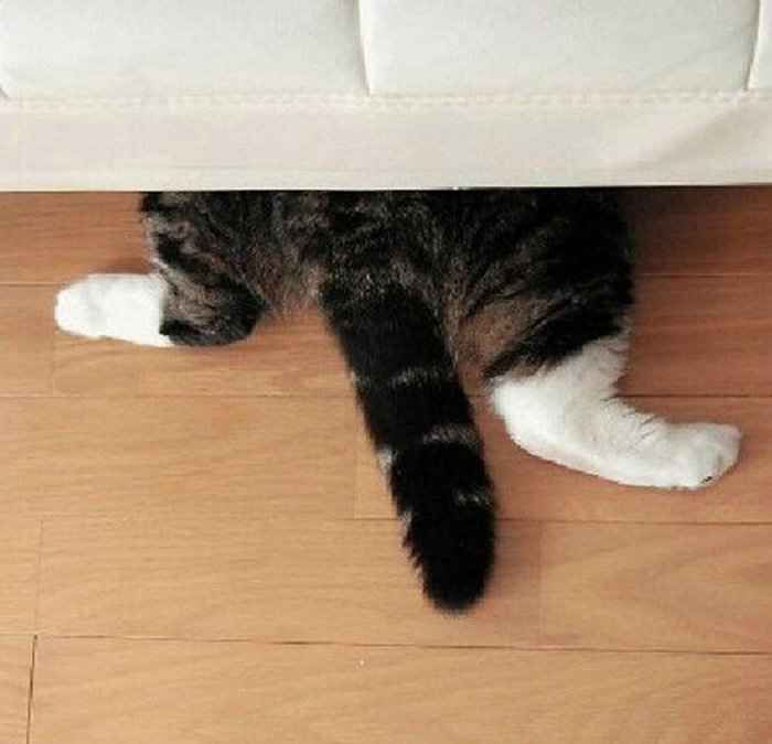 Cats Playing Hide And Seek With You (6)