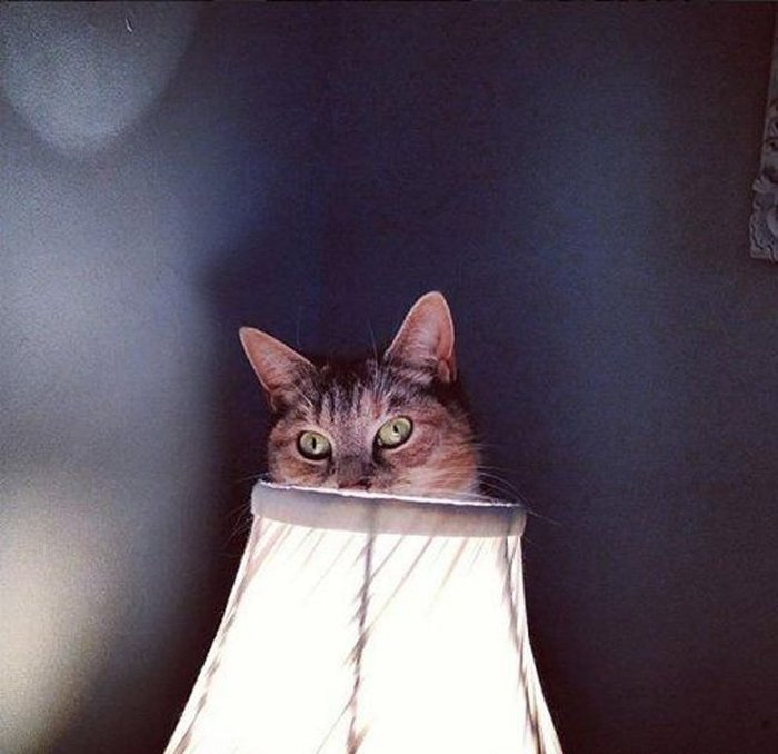 Cats Playing Hide And Seek With You (3)