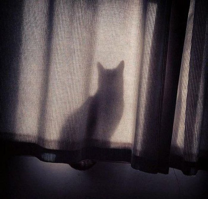 Cats Playing Hide And Seek With You (2)