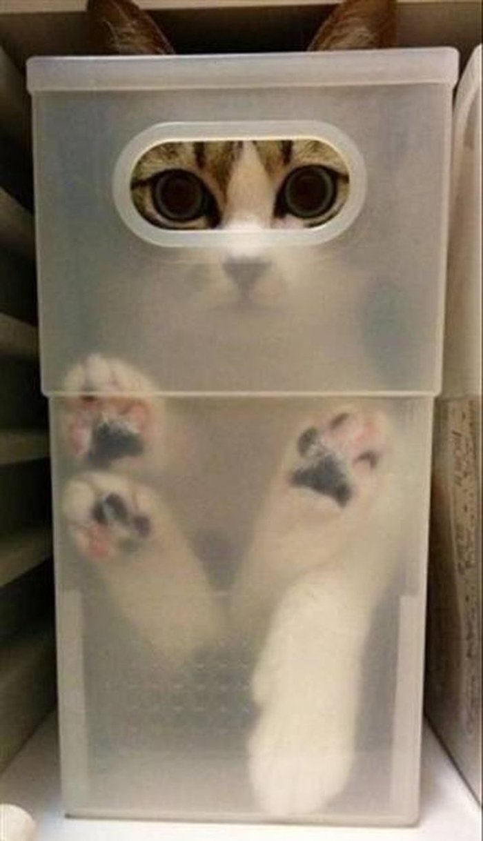 Cats Playing Hide And Seek With You (19)