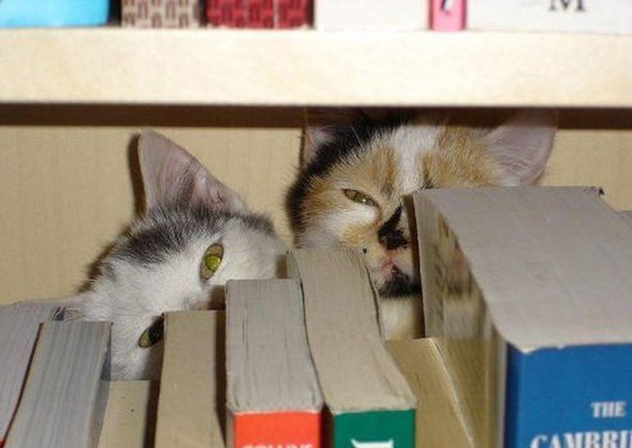 Cats Playing Hide And Seek With You (1)