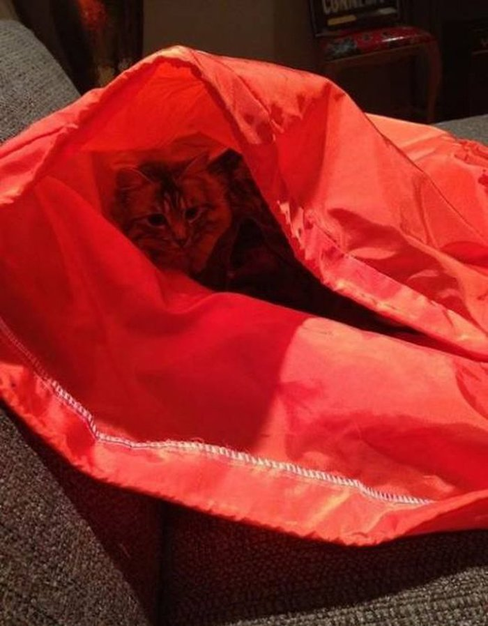 Cats Playing Hide And Seek With You (16)