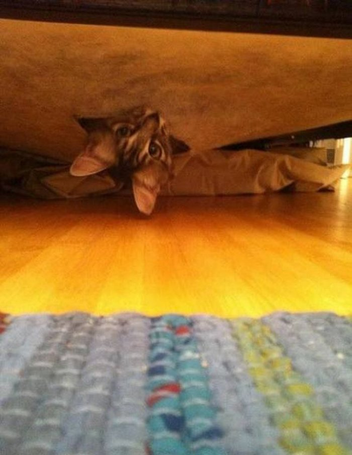 Cats Playing Hide And Seek With You (15)