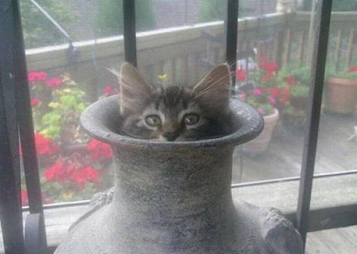 Cats Playing Hide And Seek With You (12)