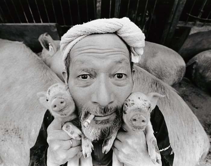 Farmer And His Pigs Friendship (13)