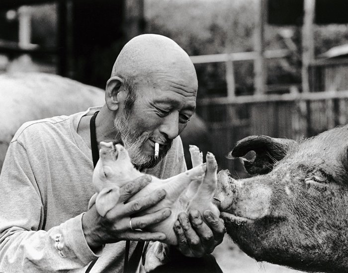 Farmer And His Pigs Friendship (4)