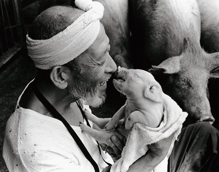 Farmer And His Pigs Friendship (1)