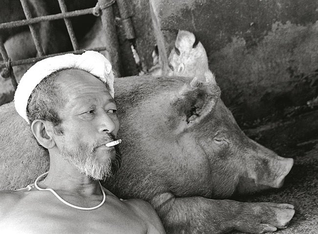 Farmer And His Pigs Friendship (8)