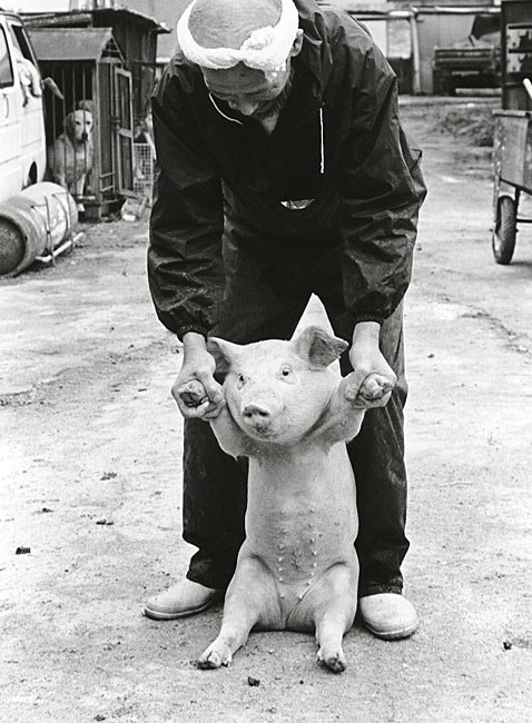 Farmer And His Pigs Friendship (6)