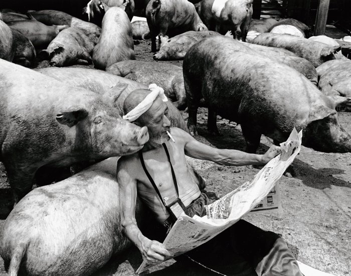 Farmer And His Pigs Friendship (5)