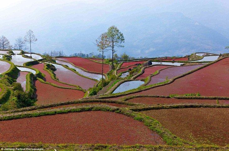 World's Largest Terraced Paddy Fields, Yuen Yang, China (6)