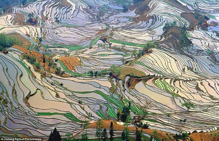 World's Largest Terraced Paddy Fields, Yuen Yang, China (5)