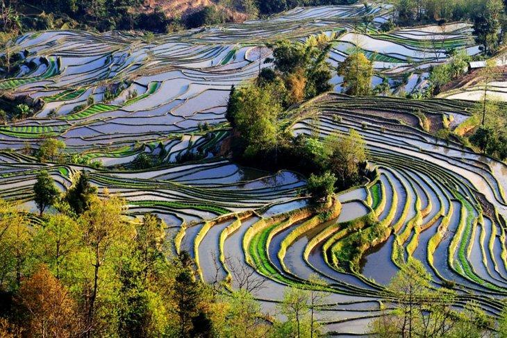 World's Largest Terraced Paddy Fields, Yuen Yang, China (1)