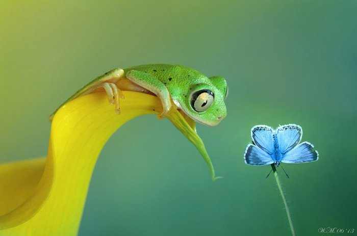 world of frogs in macrophotography (16)