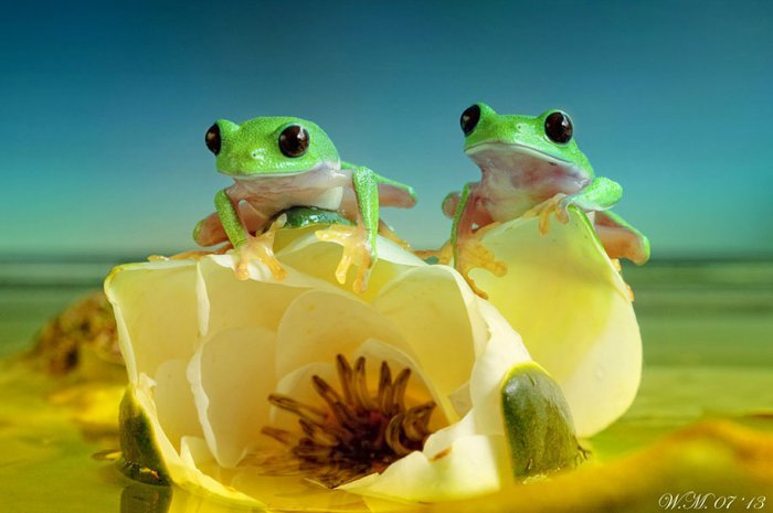 world of frogs in macrophotography (3)