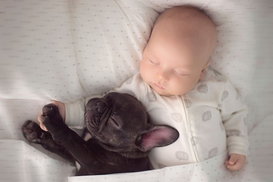 Baby And Bulldog Photography (5)