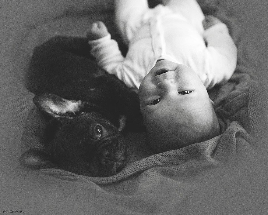 Baby And Bulldog Photography (4)