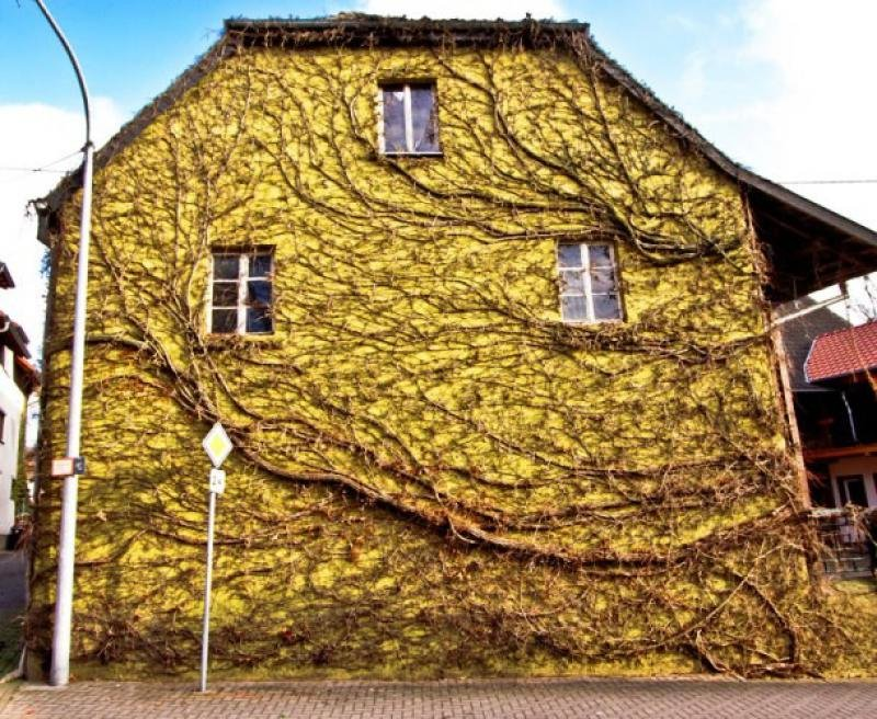 Example of Nature Won the Human Architecture (25)