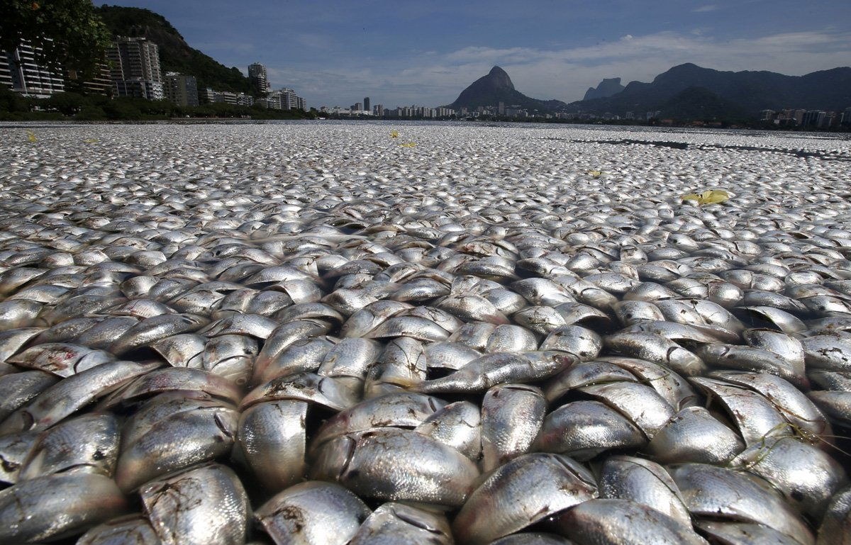 Rio 2016: contamination and expenses sloppy Olympic waters (7)