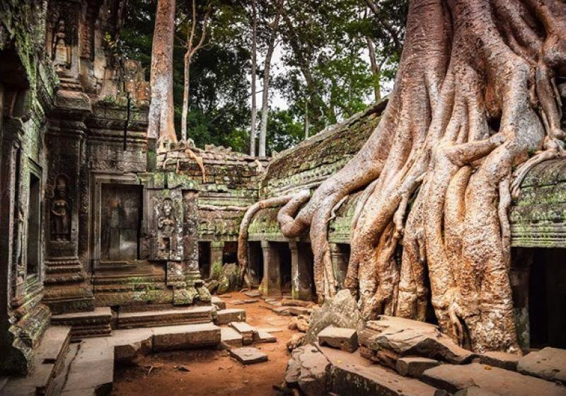 Example of Nature Won the Human Architecture (13)