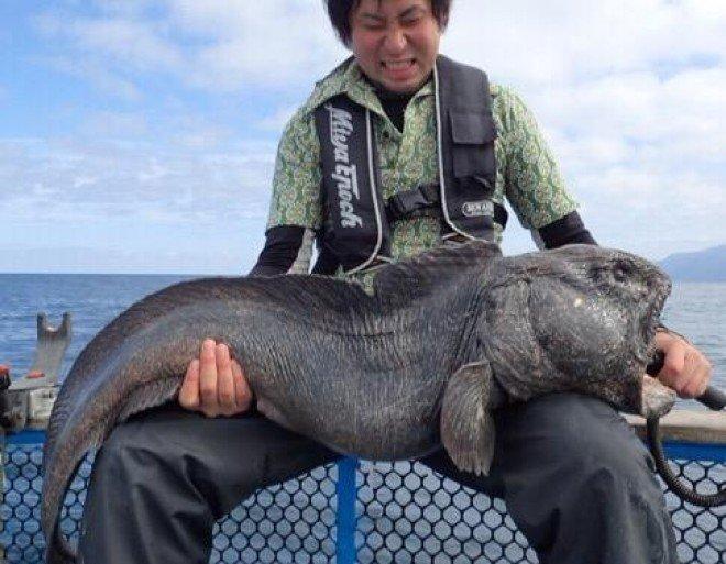 Alien Fish or Fukushima disaster - Wolf fish  (2)
