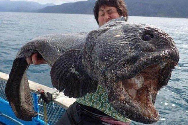Alien Fish or Fukushima disaster - Wolf fish  (6)