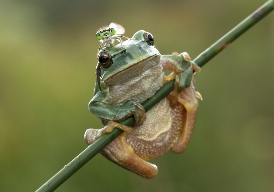 Different Style Frogs Photography (25)