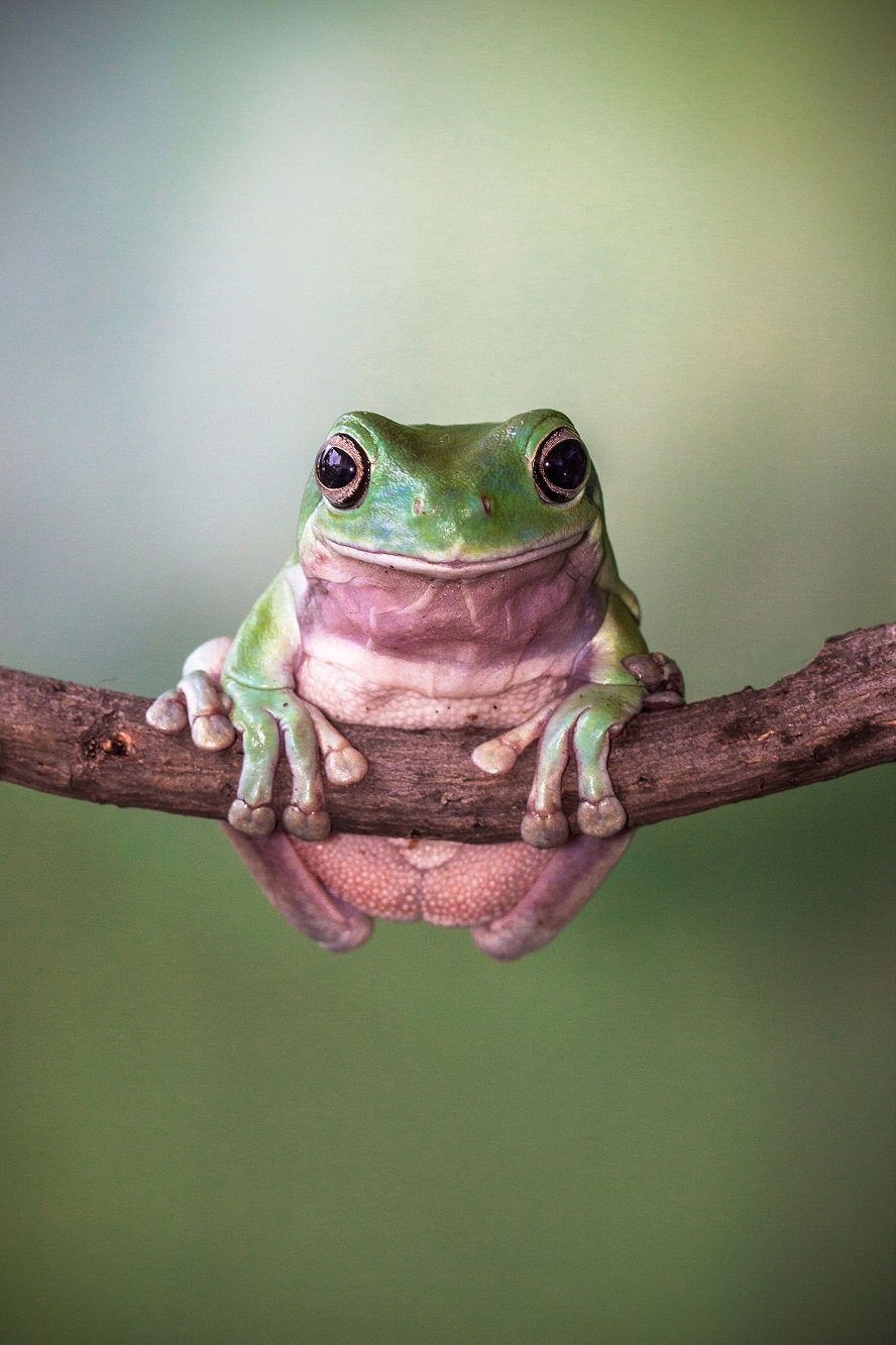 Different Style Frogs Photography (21)