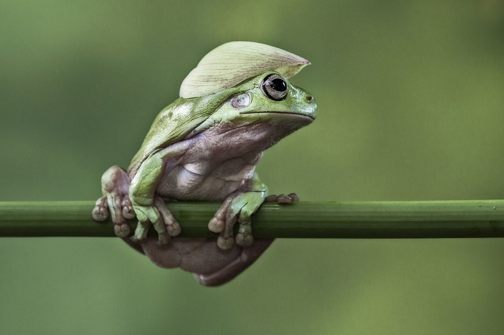 Different Style Frogs Photography (20)