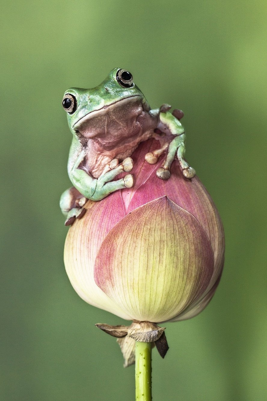 Different Style Frogs Photography (19)