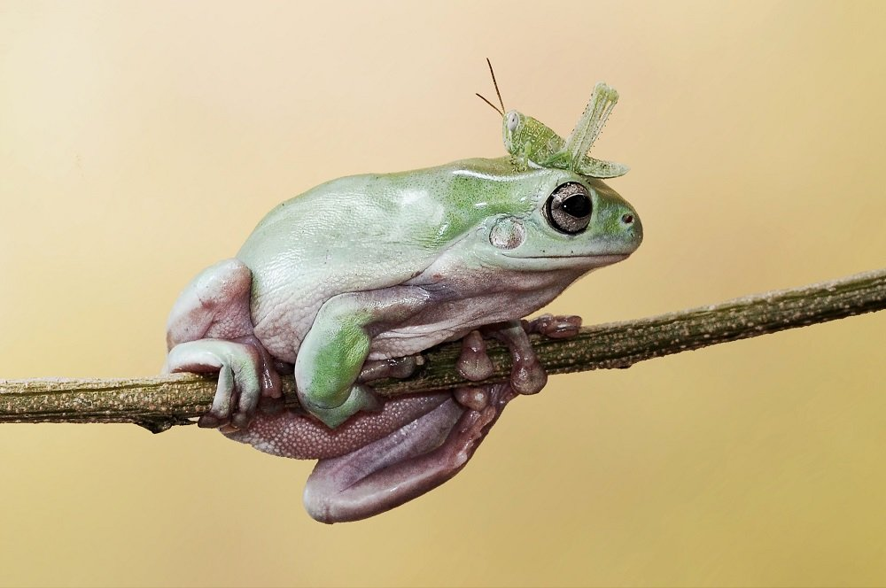 Different Style Frogs Photography (13)