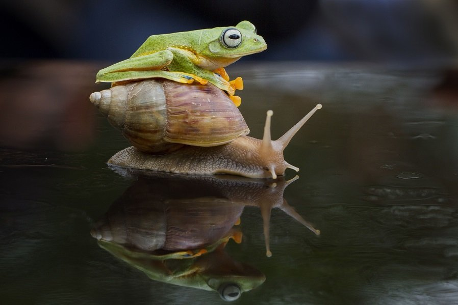 Different Style Frogs Photography (12)