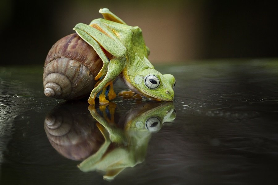Different Style Frogs Photography (11)